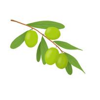 青枣水果手绘绿色